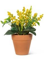 "Lavender Plant Yellow 6"""