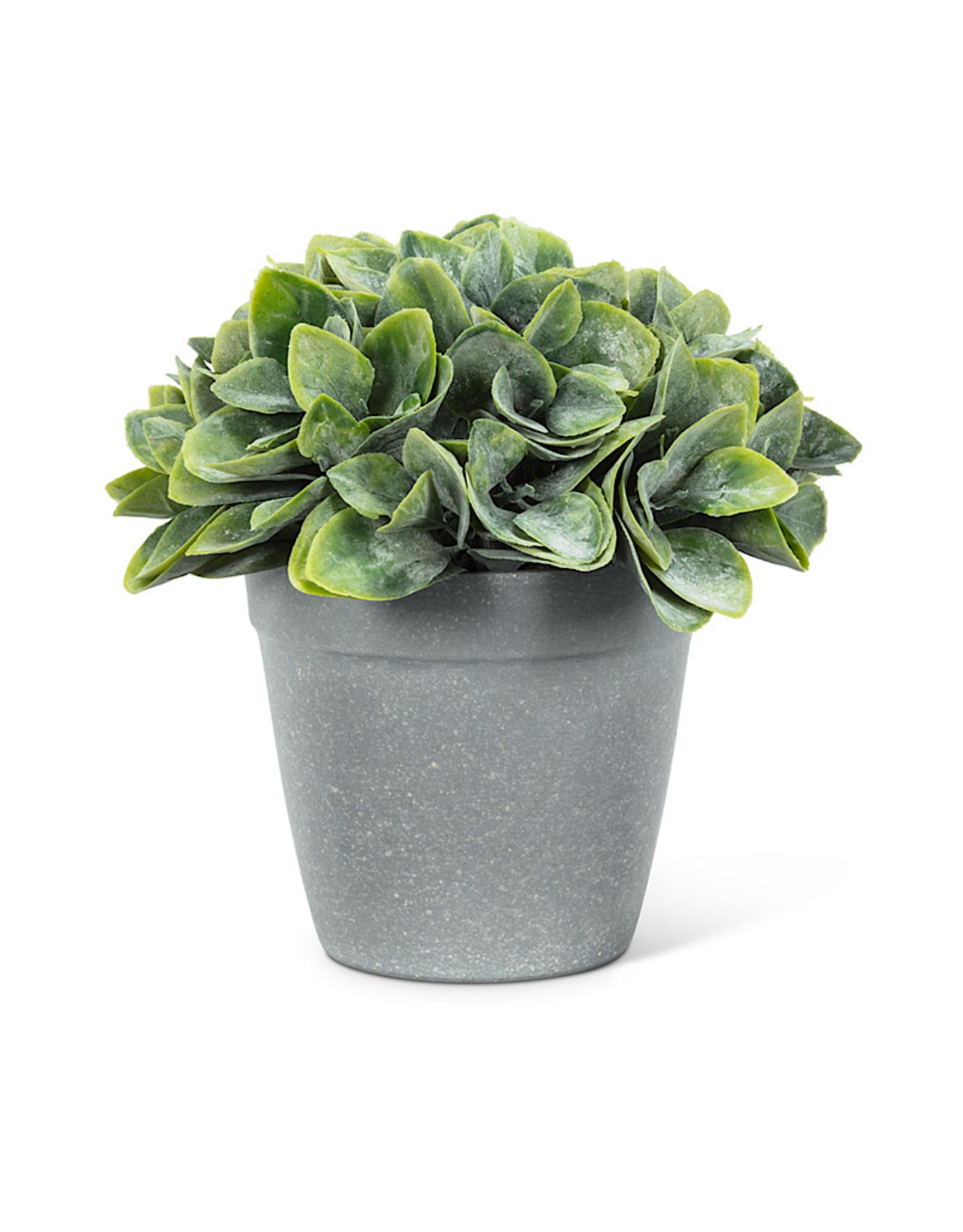 Spade Green Leaf Plant