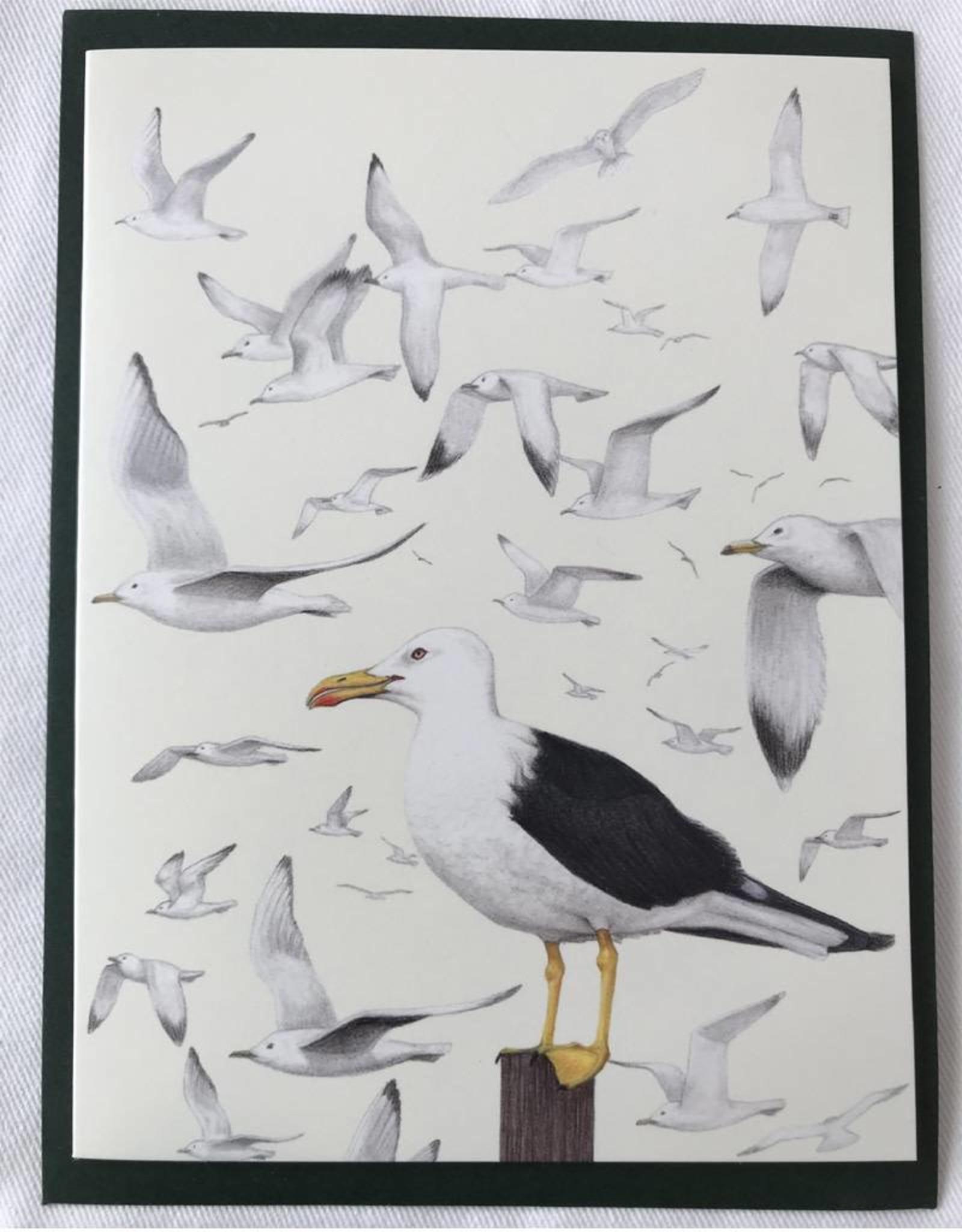 TBL13 Seagulls
