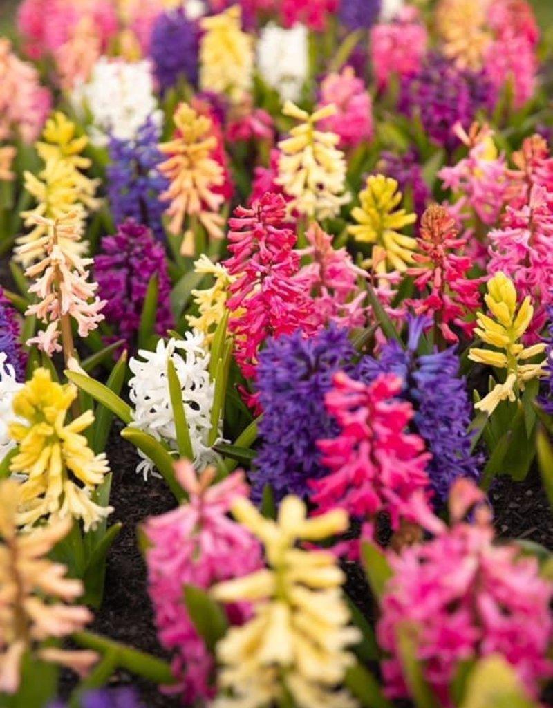 Katie's Cut Flowers Easter Bunch in Mason Jar