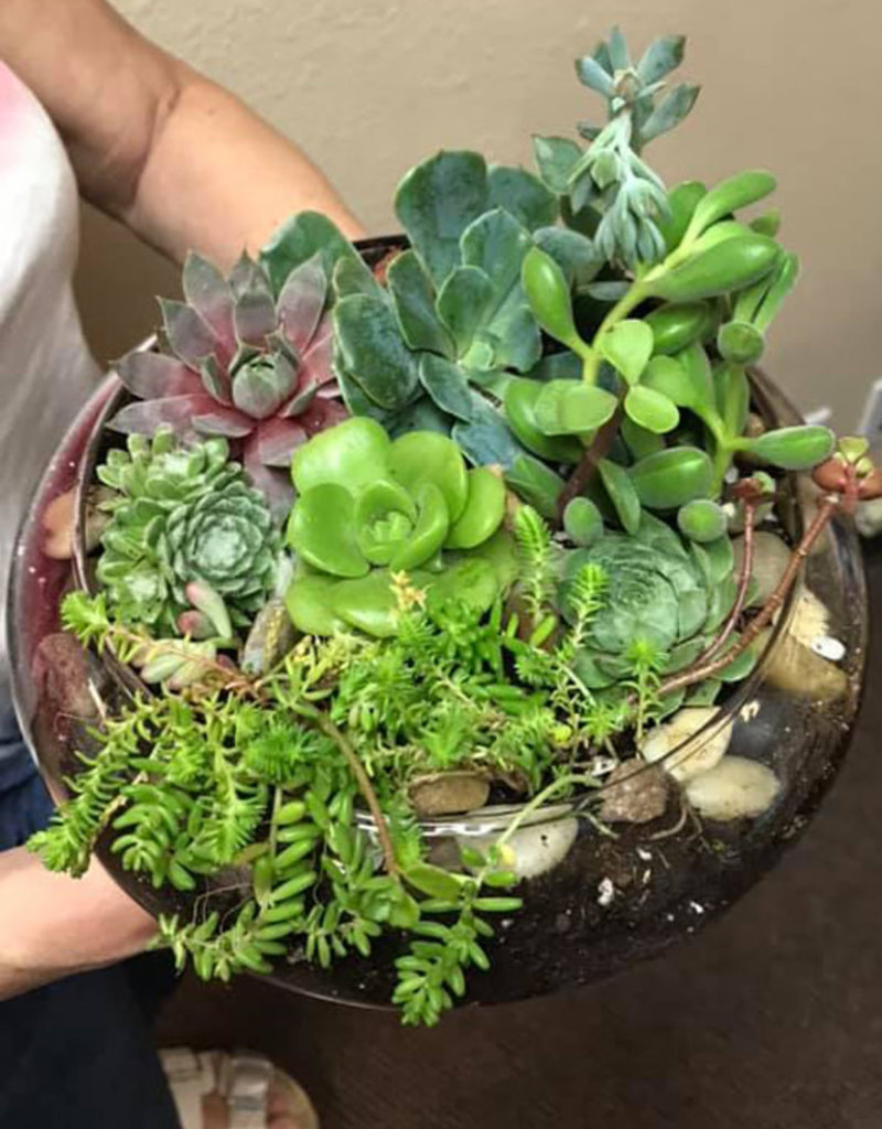 The Studio @ Linnea's Seasonal Terrarium Planting Class