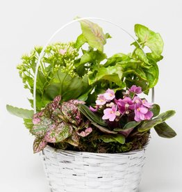 Blooming Plant Basket - Deluxe