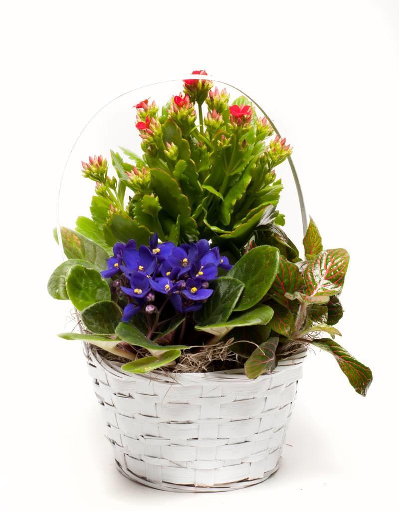 Blooming Plant Basket - Plus