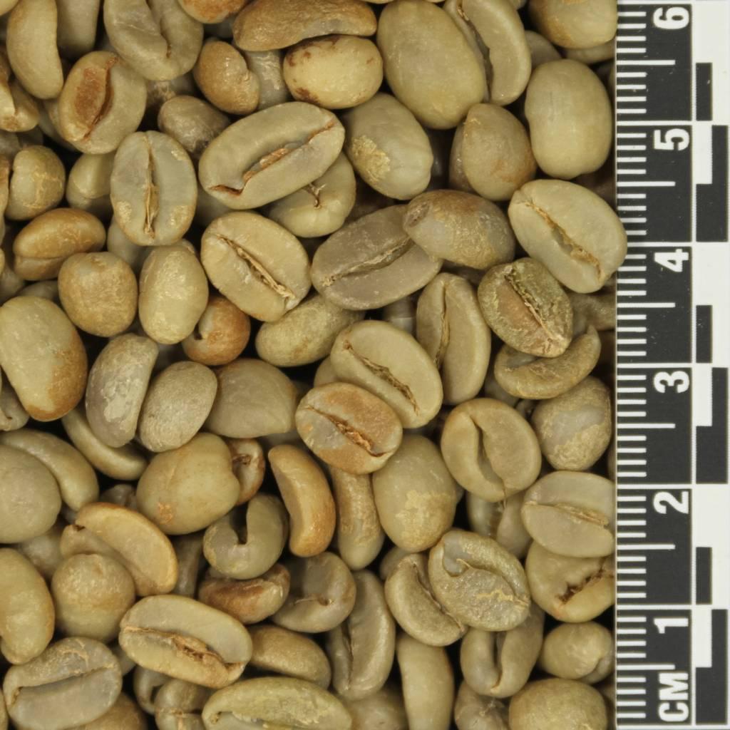 Bali Kintamani Natural Mr Green Beans