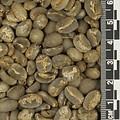 Sumatra Takengon *