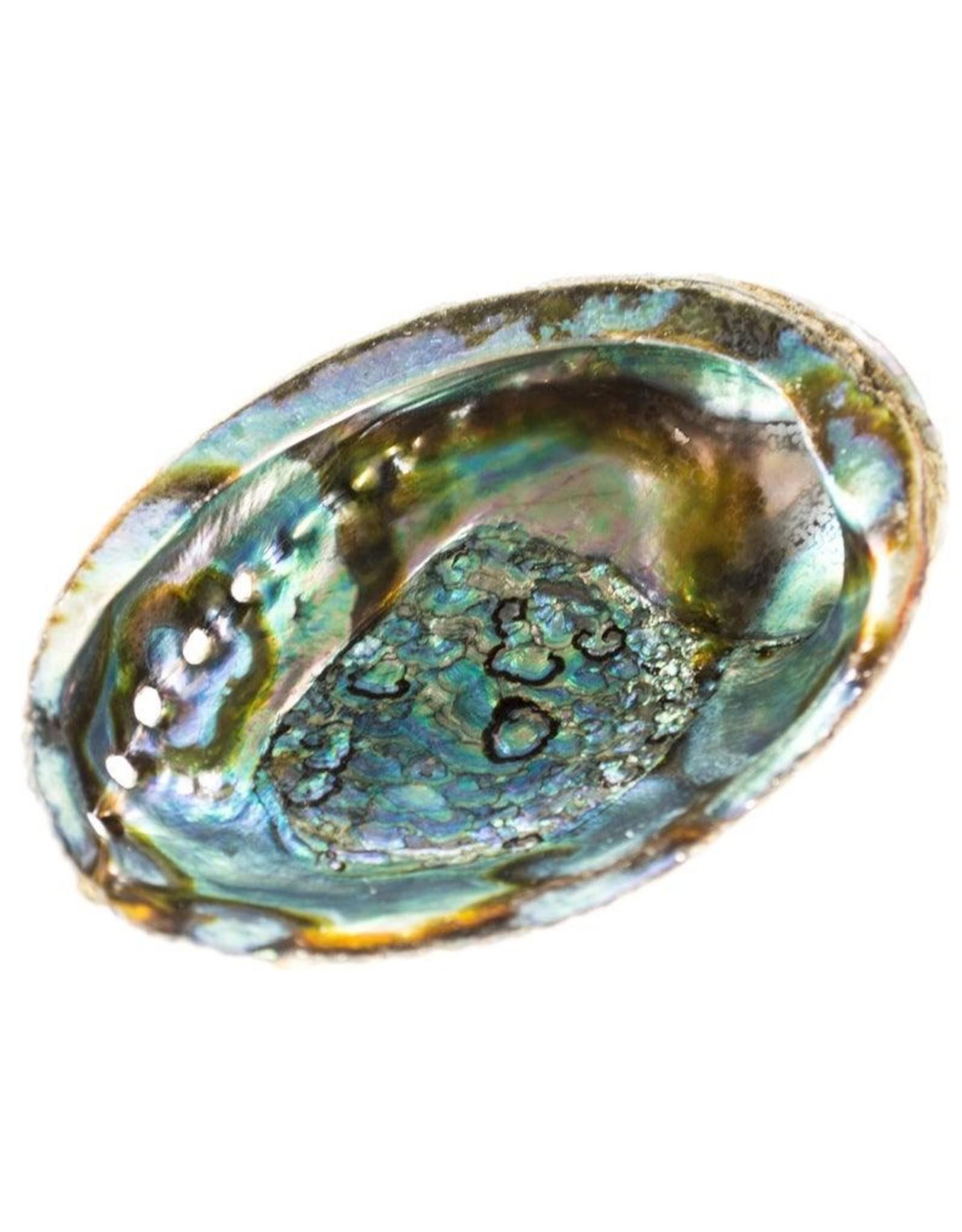 Abalone Shell One Side Polishied 5-6 inch