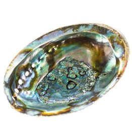 Virgelles Abalone Shell One Side Polishied 5-6 inch