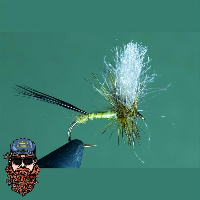 Jojo's Flav/Drake Mackerel