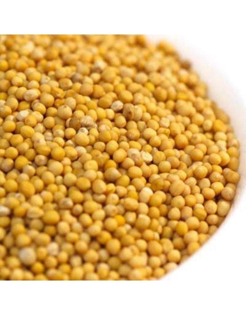 Seasoning  Yellow Mustard Seed