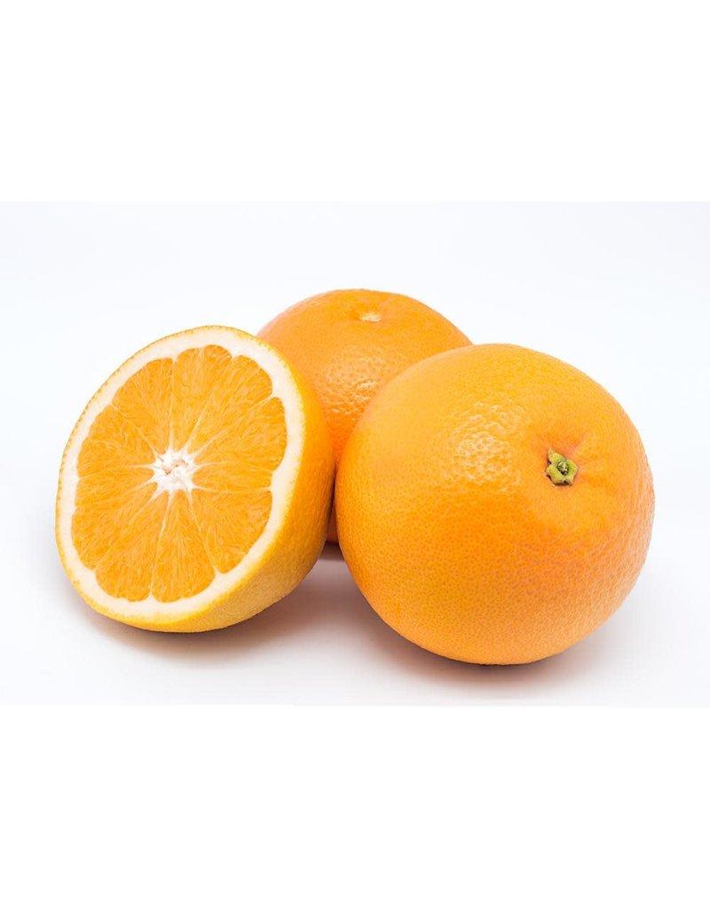 Infused Sweet Valencia Orange