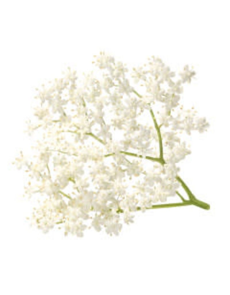 White Balsamic Elderflower