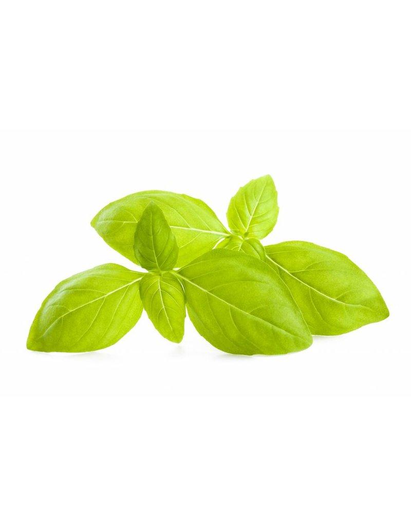 Infused Olive Oil Basil