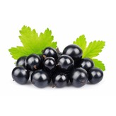 The Anointed Olive Dark Balsamic Black Currant