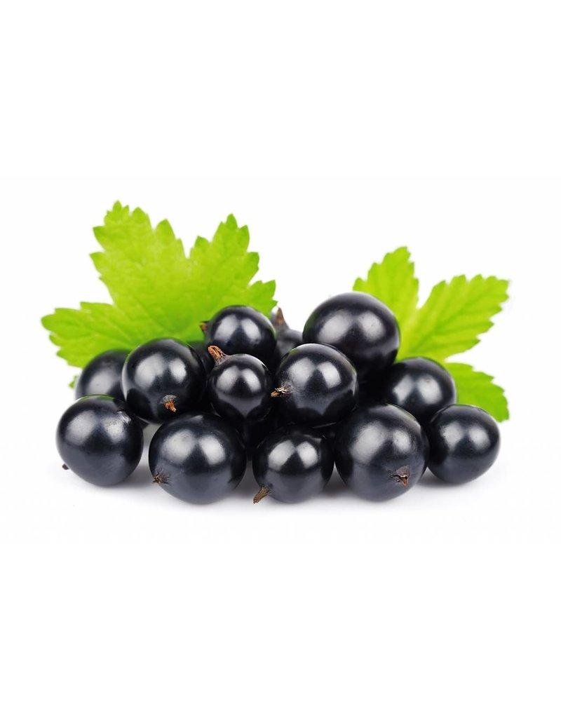 Dark Balsamic Black Currant