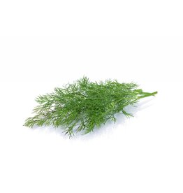 Infused Wild Dill