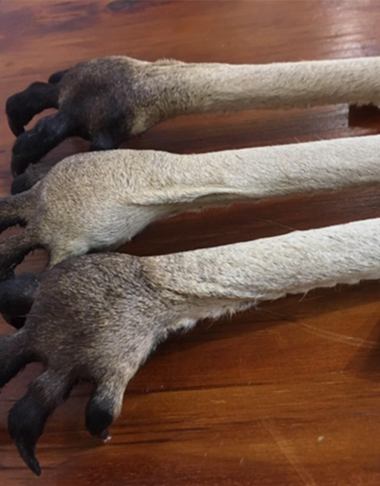 Crocodile & Stingray Products Kangaroo Paw Back Scratcher