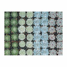 Slate Succulents 500 piece double-sided puzzle