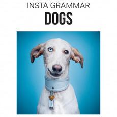 "Lanoo Publishers ""Insta Grammar"""