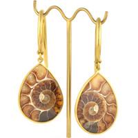 Ammonite Drop, Medium