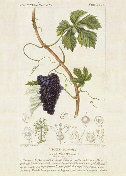 Single Cards- Grapevine