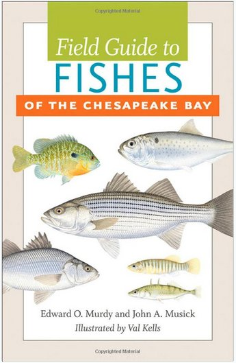 Johns Hopkins University Press Field Guide to the Fishes of the Chesapeake Bay