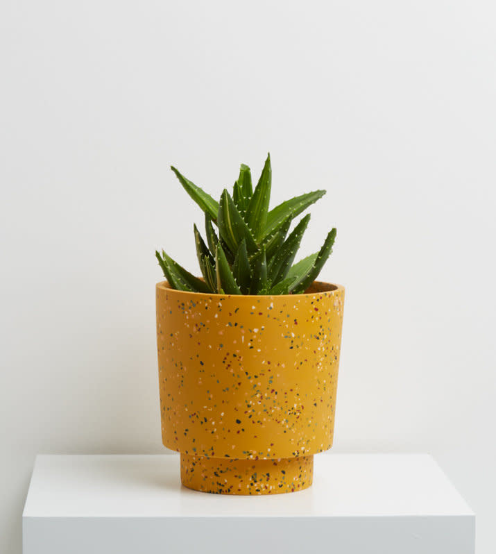 Capra Medium Planter in Golden Terrazzo