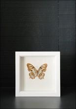 Bug Under Glass Framed Malachite Butterfly