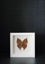 Bug Under Glass Framed Oakleaf Butterfly