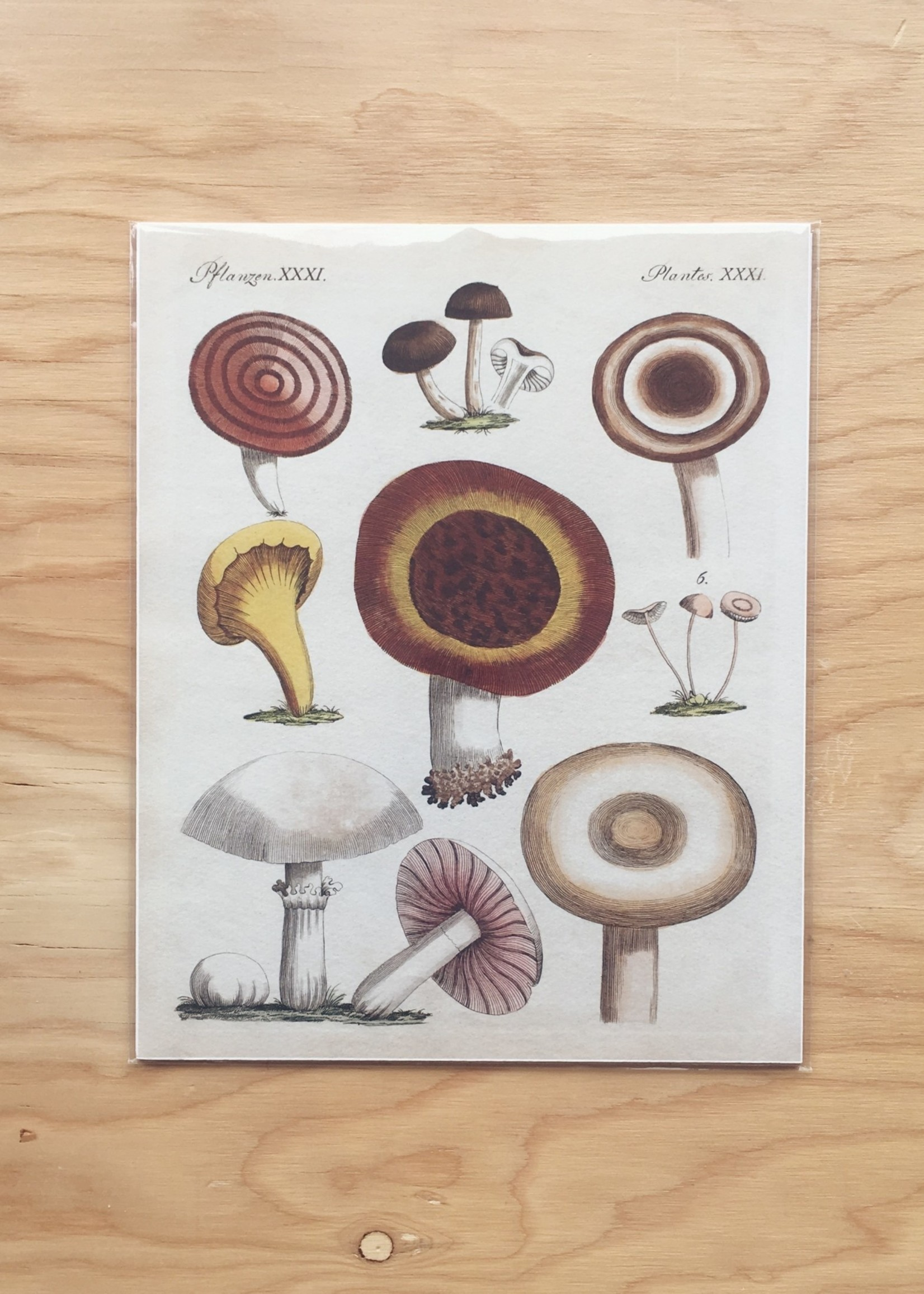 Capricorn Press Affichette de  Capricorn Press - 20cm x 25cm