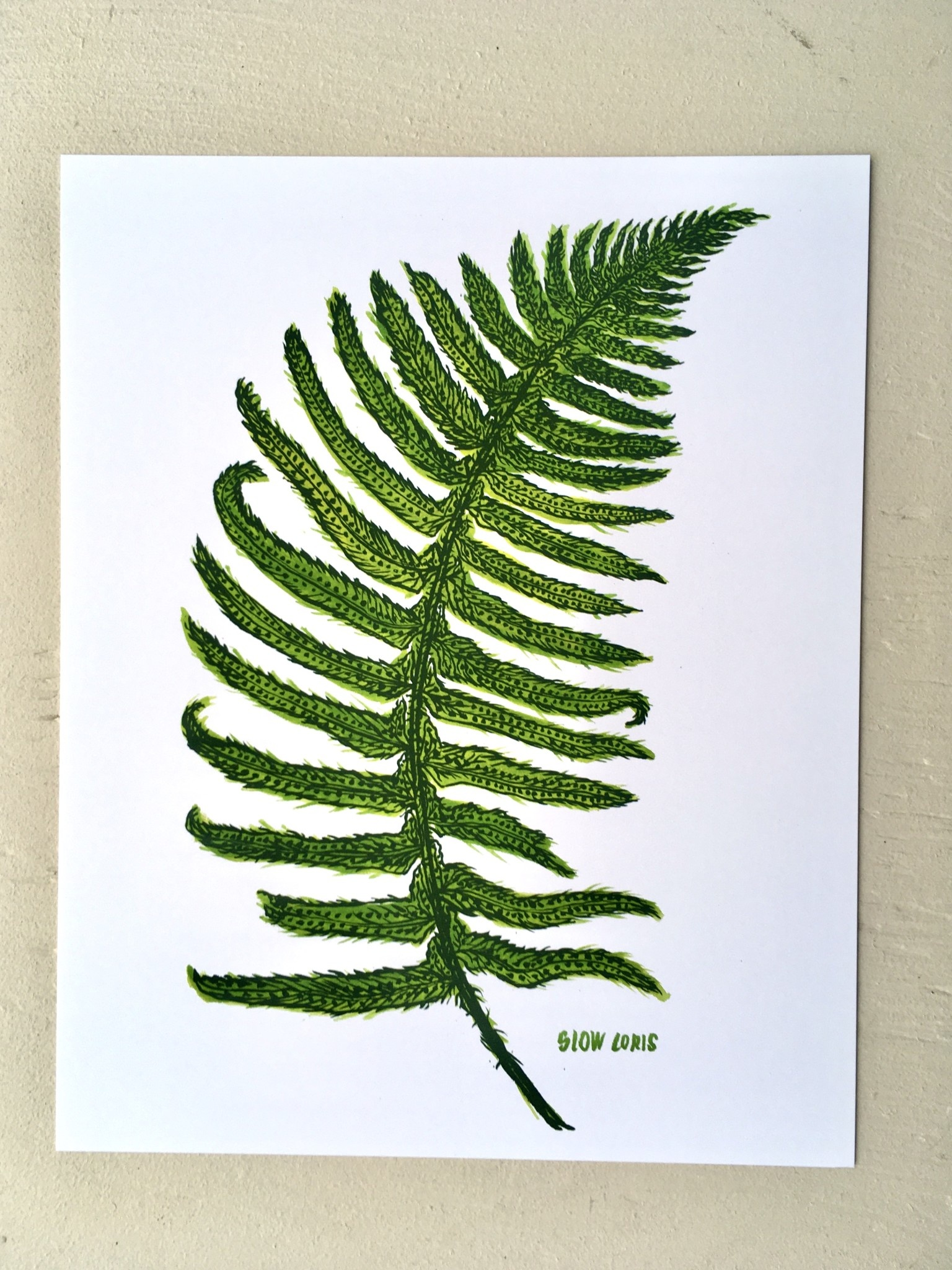 "Slow Loris Affiche ""Sword Fern"" - 21.6cm x 28cm"
