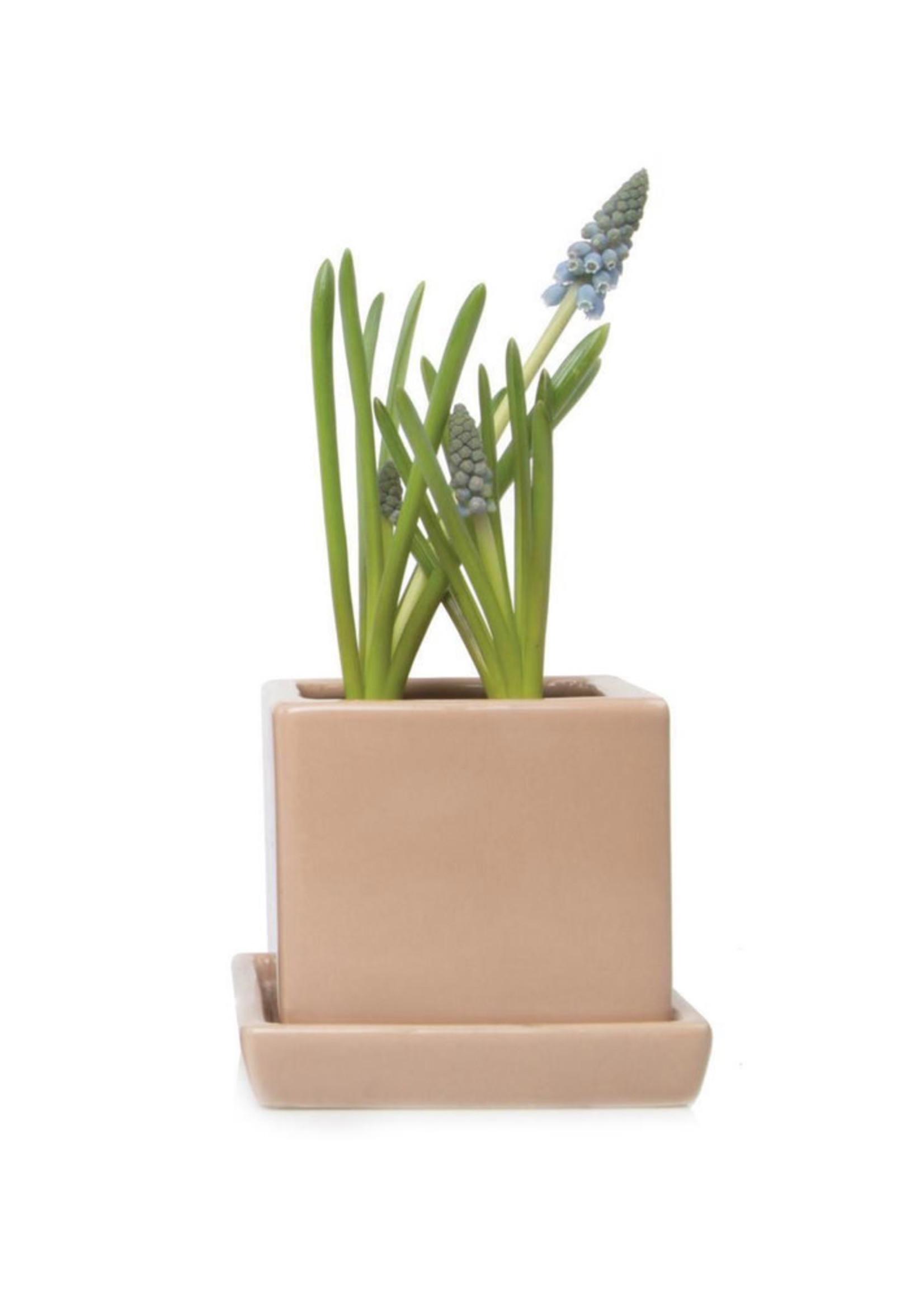 Chive Pot pour plantes Cube