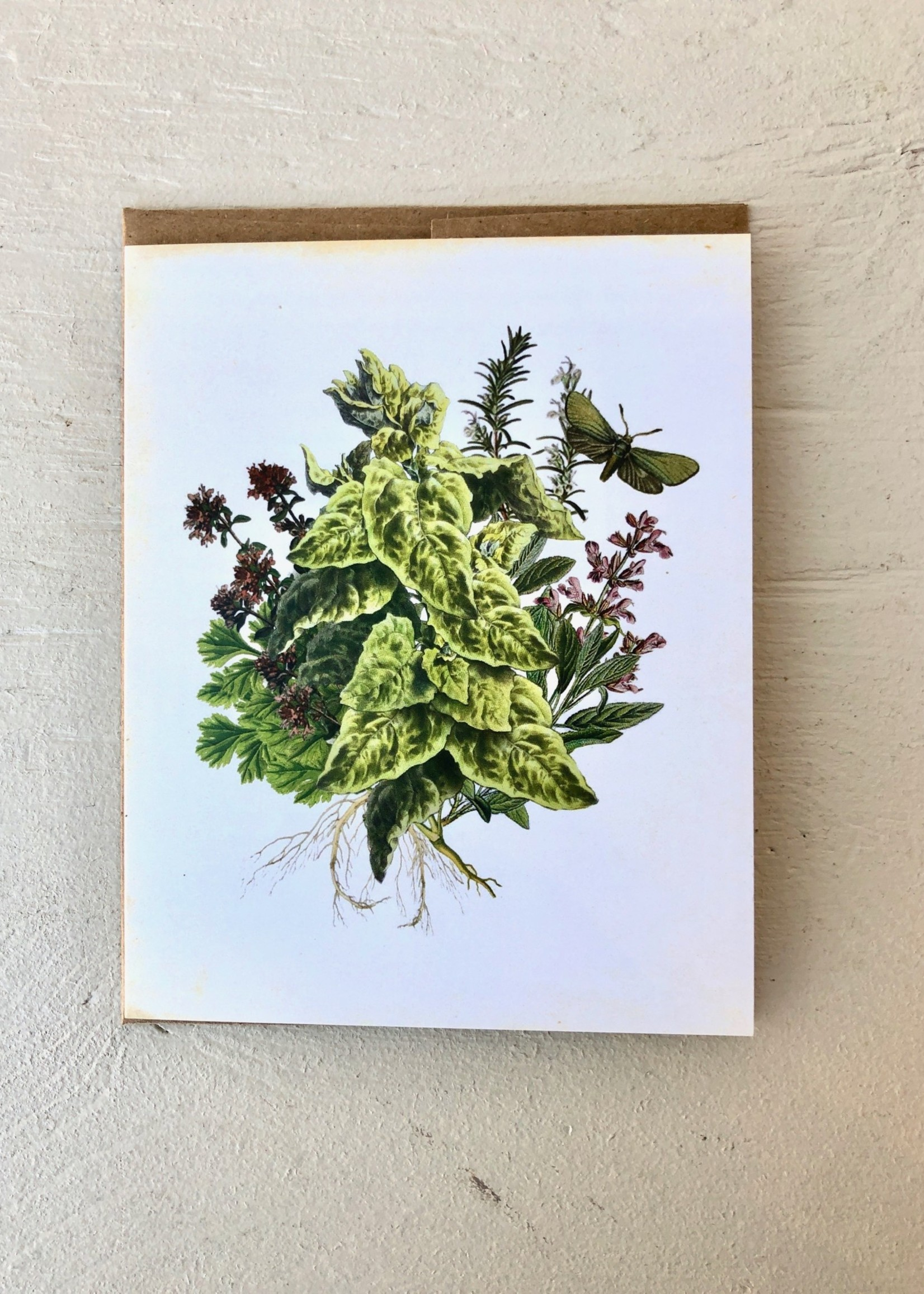 Strathcona 1890 Seeds Carte de Strathcona 1890