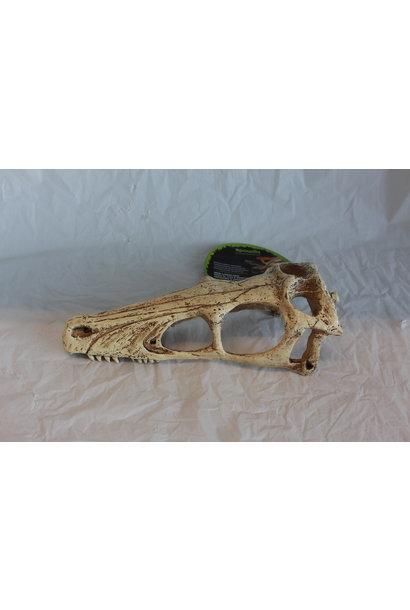 Komodo Raptor Skull - Large