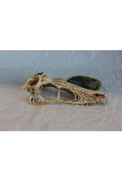 Komodo Raptor Skull - Small