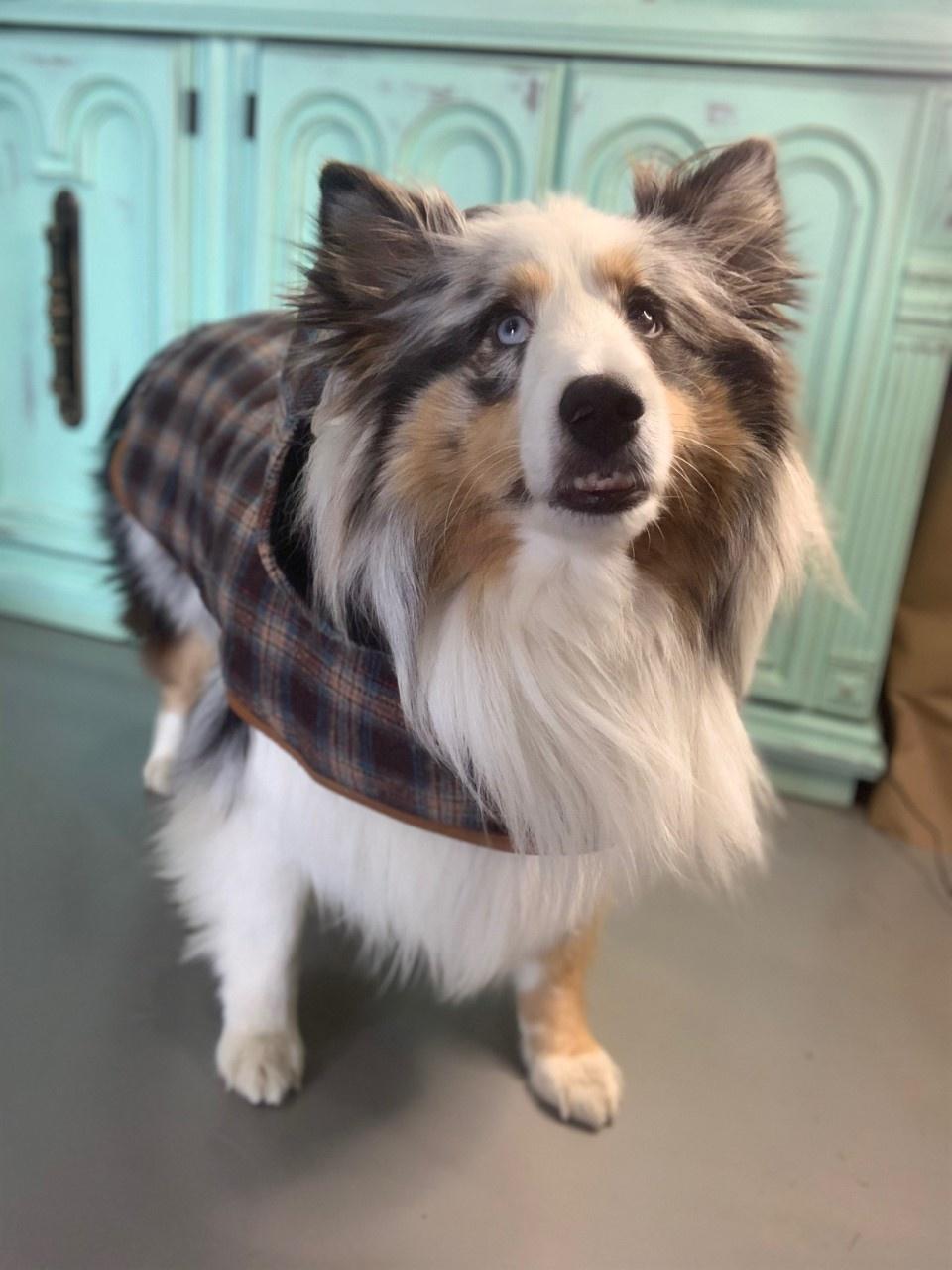 Doggie-Q Grey Lumberjacket-1