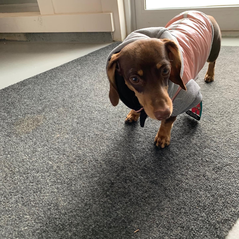 Doggie-Q Pink Puffer-1