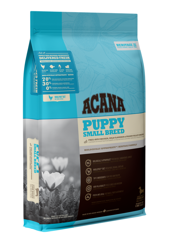 ACH Small Breed Puppy-1