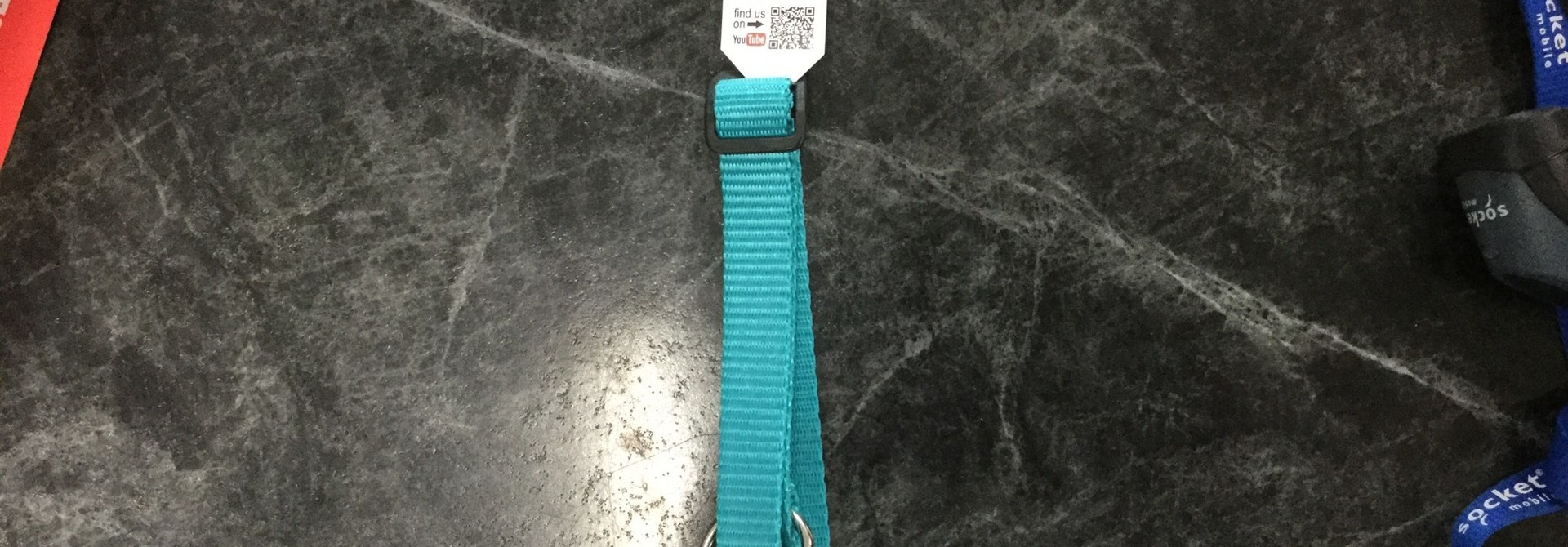 Adjustable Dog Collar -Teal