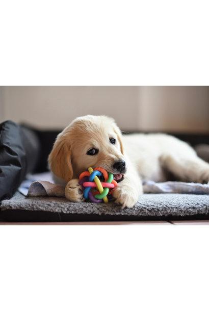 20 Pass Ruff Play Dog Daycare