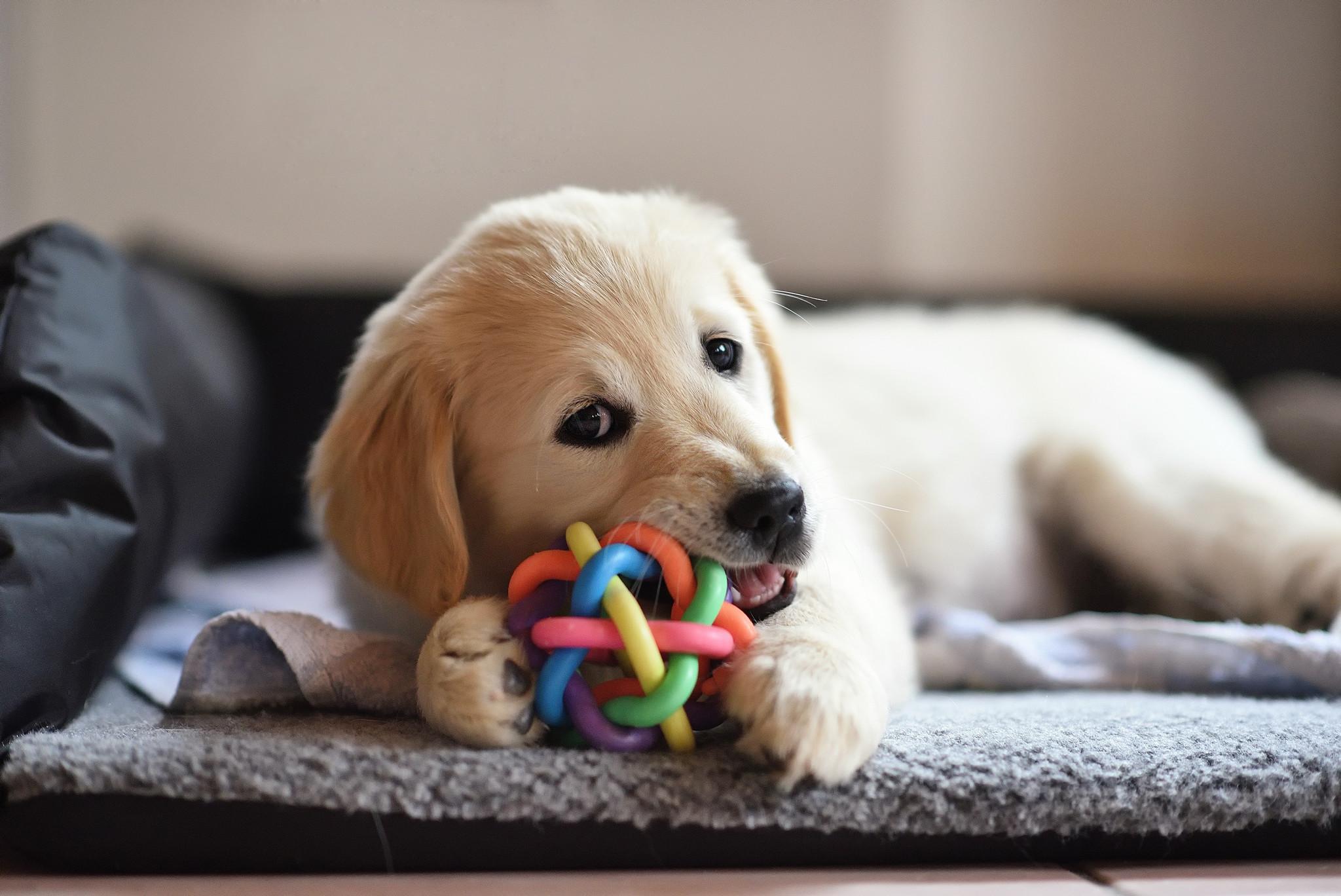 20 Pass Ruff Play Dog Daycare-1