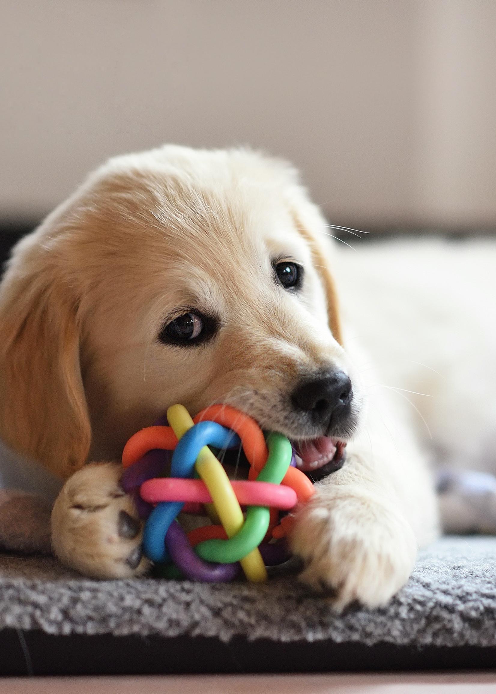 5 Pass Ruff Play Dog Daycare
