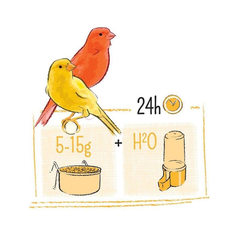 Canary 750gm-3