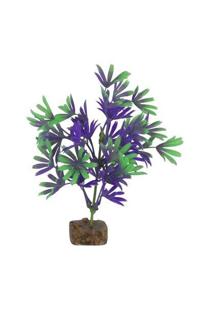 GloFish Plant, Small Purple/Green