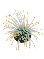 Sporn Aquatic Anemone ORANGE TIP Glow in the dark