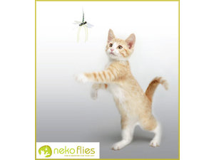 Neko flies