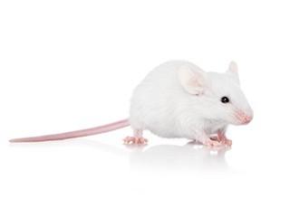 3 Frozen Hopper Mice