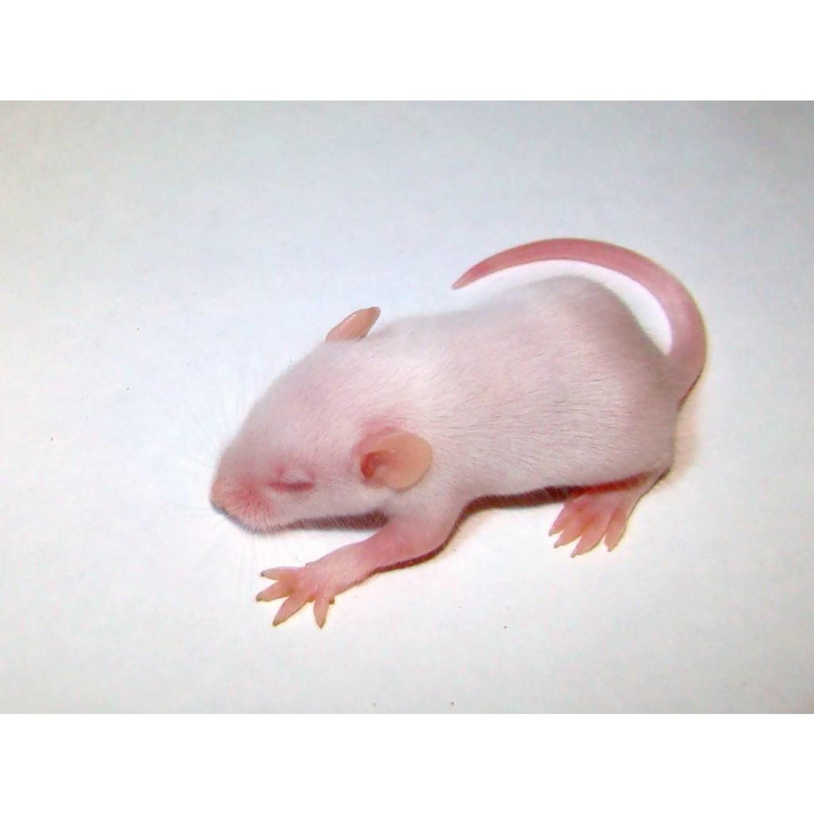 5 Frozen Fuzzy Mice