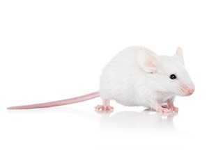 5 Frozen Hopper Mice