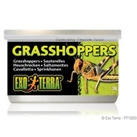 Exo Terra Canned Grasshoppers - 34 g (1.2 oz)-1