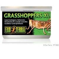 Exo Terra Canned Grasshoppers - XL - 34 g (1.2 oz)-1